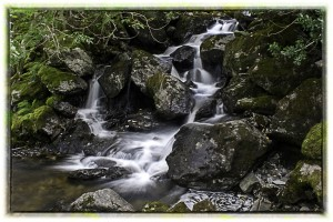 We teach students the use of camera settings to achieve the silky water effect in the beck.
