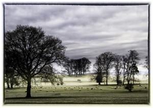 Photograph in landscape gallery of sheep on a misty morning in parkland.